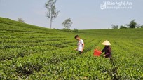 Nghệ An: Tìm nhà đầu tư chiến lược cho các công ty nông, lâm nghiệp