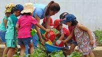 Lợi ích kép khi trồng rau an toàn trong trường học
