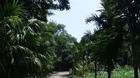 Cự Thôn - vẻ đẹp làng Việt