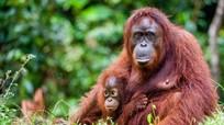 10 động vật sắp biến mất khỏi trái đất vĩnh viễn