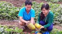 Nông dân thu tiền tỷ mỗi năm nhờ trồng dưa xen cam