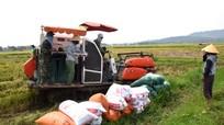 'Cò' máy gặt vẫn hoạt động ở huyện trọng điểm lúa Nghệ An
