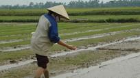 Diễn Châu gấp rút vào vụ hè thu với 6.000 ha lúa chất lượng cao