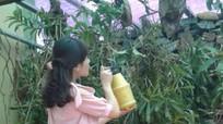 Lan rừng, tinh dầu dược liệu Quế Phong được ươm mầm khởi nghiệp