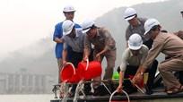 Thả gần 500kg cá giống xuống lòng hồ thủy điện Bản Vẽ