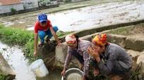 Ngôi làng có trăm hộ dân phải dùng nước mương