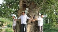 Cây đa 3 nhánh trên 400 năm tuổi ở Nghệ An