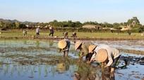 Chuyển hơn 190 ha đất lúa sang sử dụng cho các công trình, dự án