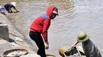 Thiếu nguồn nước cho cảng cá Lạch Vạn?