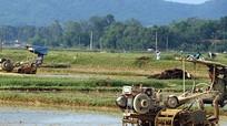 Đô Lương gieo cấy 7.300 ha lúa hè thu