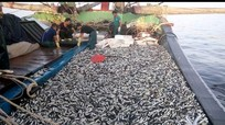 Xem ngư dân Quỳnh Lưu đánh cá cò trên biển Đông