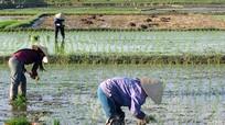 Yên Thành khẩn trương khép kín 12.500 ha lúa hè thu