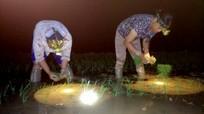 Nông dân 'mang tơi, đội đèn' chống nắng