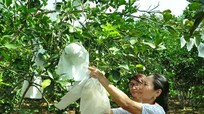 Những mô hình khuyến nông hiệu quả ở thị xã Thái Hòa