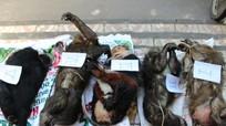Sang Lào mua 5 cá thể vọc, khỉ về bán