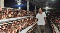 Trứng gia cầm giảm sâu vì thịt lợn?