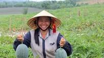 Dưa hấu được giá, nông dân thu lãi gần 100 triệu đồng/ha
