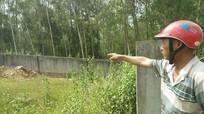 Nghệ An: 14 người cấp cứu vì ong rừng tấn công