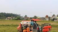 Tích tụ ruộng đất:  Vẫn thiếu doanh nghiệp trên đồng
