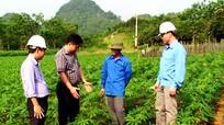 Phát triển bền vững vùng nguyên liệu sắn