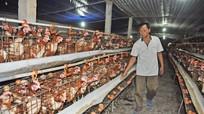 Hơn 146.000 hộ nông dân Nghệ An đạt danh hiệu Hộ sản xuất kinh doanh giỏi