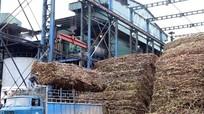 Hạn chế tình trạng 3 nhà máy đường ở Nghệ An tranh mua vùng nguyên liệu mía