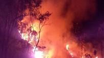 Cháy rừng thông phòng hộ ở Quỳnh Lưu (Nghệ An)