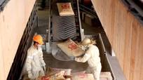 Tập đoàn The Vissai xuất bán xi măng bao tại Trạm nghiền Nghi Thiết (Nghệ An)