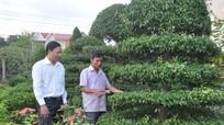 Thành phố Vinh chi 17 tỷ đồng cho hệ thống cây xanh