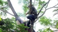 Mùa săn ong mật rừng ở xứ Nghệ