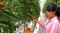 Những mức hỗ trợ hấp dẫn cho doanh nghiệp đầu tư vào nông nghiệp