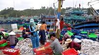 Ngư dân Nghệ An trúng mẻ cá ngăm gần 1 tỷ đồng
