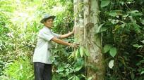 Cách giữ rừng của người dân bản Hốc