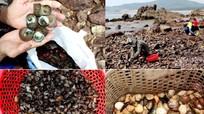 Săn đặc sản biển chỉ có mỗi tháng 1 lần ở Mũi Rồng
