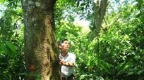 Chuyện ở Nghệ An: Giao rừng cho dòng họ giữ
