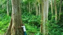 Khu 'rừng cấm' của người Thái ở Tương Dương