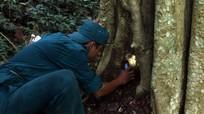 Mùa săn dế rừng làm mồi nhậu