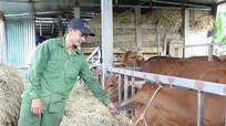 Hiệu quả nghị quyết về phát triển chăn nuôi ở Quỳ Hợp