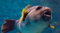 10 loài vật có độc chết người bạn cần biết