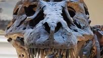Giới khoa học bối rối vì hàm răng khủng long bạo chúa
