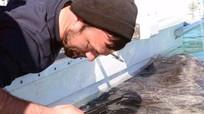 Cá mập Greenland có thể sở hữu 'gene trường sinh'