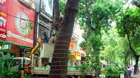 TP Vinh chặt tỉa cây trước giờ bão số 2 đổ bộ