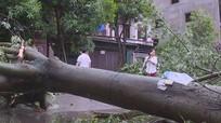 Nghệ An: Thành lập 21 đoàn công tác chỉ đạo khắc phục hậu quả bão số 2
