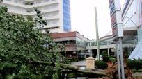 Hàng chục cây đại thụ ở thành Vinh bị bão số 2 'đánh gục'