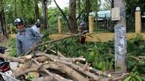 'Mót củi' sau bão ở thành Vinh