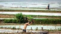 Sau bão, nông dân chạy đua với trời, gieo cấy lại diện tích lúa bị tàn phá