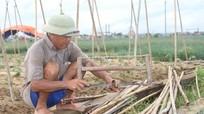 Nghệ An: Nông dân tái sản xuất rau màu sau bão