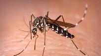 10 việc cần làm ở nhà để phòng sốt xuất huyết