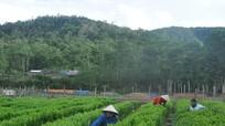 Bổ sung quy hoạch rừng nguyên liệu tăng sinh kế cho người dân