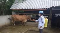 Anh Sơn: Tập trung phòng chống dịch bệnh cho đàn vật nuôi sau bão